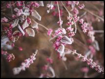 Blomst Nærbillede
