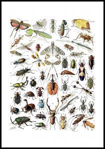 Skole - Insekter II