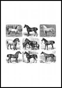 Hestevæddeløb