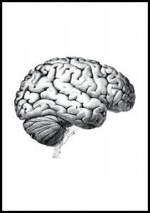 Skole - Hjernens dele