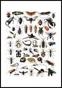 Skole - Insekter I