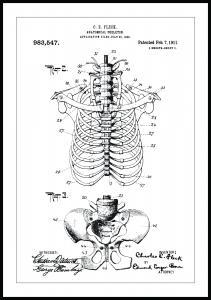 Patenttegning - Anatomisk Skelet II - 13x18 cm