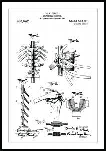 Patenttegning - Anatomisk Skelet III - 13x18 cm